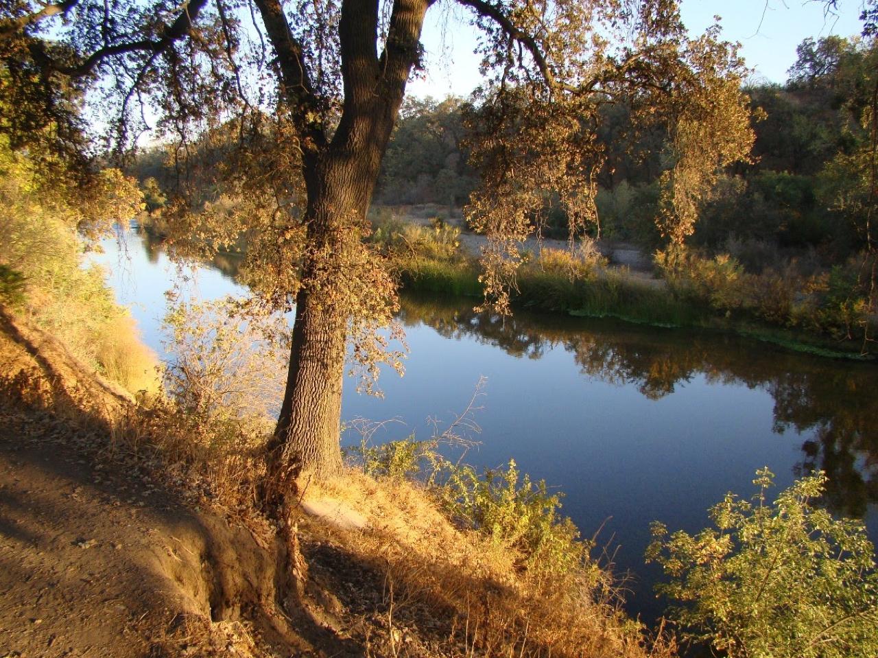 Tuolumne River riparian corridor